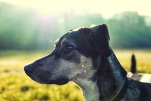 Wie verhalte ich mich, wenn ich einen Hund überfahren habe?