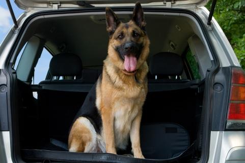 Für Hunde ist eine Krankenversicherung sehr hilfreich, wenn diese von Ihnen abgeschlossen wird.