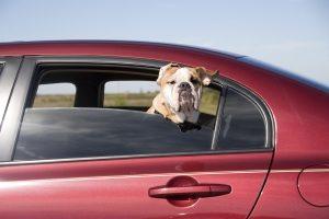 Die Hundehaftpflichtversicherung greift auch, wenn das Tier ein fremdes Auto beschädigt.