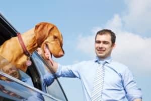 Eine Hundekrankenversicherung gibt dem Tierhalter ein ruhiges Gewissen, für den Notfall.