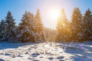 Illegal Weihnachtsbäume zu fällen kann ein Bußgeld nach sich ziehen.