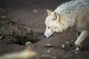 Jagen ohne Jagdschein zieht eine Strafe nach sich.