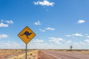 Hat ein Känguru einen Unfall verursacht, ist die Polizei zu verständigen.