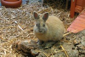 Schlachtet kaninchen frau Hasen schlachten
