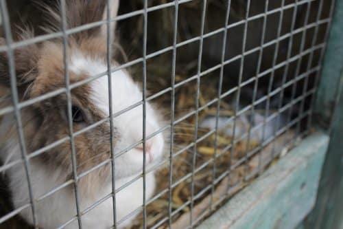 Die Kaninchenmast und die Käfighaltung erfolgen stets im Rahmen der Tierschutz-Nutztierhaltungsverordnung