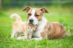 Haben Sie einen Hund oder eine Katze überfahren, liegt keine Fahrerflucht vor.