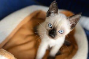 Katze gefunden: Eine Katze ist Ihnen zugelaufen? Stellen Sie zunächst fest, ob das Tier nicht bereits ein Zuhause hat.