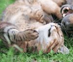 Katzenschutz
