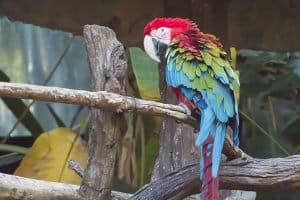 Mieter brauchen für Kleintiere keine Erlaubnis - für Papageien allerdings schon.