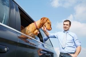 Ein kurioses Bußgeld droht Faulpelzen, wenn sie ihren Hund aus dem Auto Gassi gehen lassen.