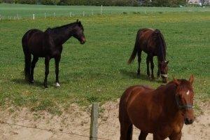 Bevor Sie eine Kutschfahrt mieten, sollten Sie sich über den Zustand von Pferden und Gefährt vergewissern.