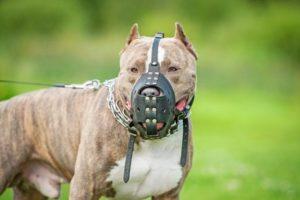 Eine Leinenpflicht für Hunde besteht gerade bei eingetragenen Listenhunden.