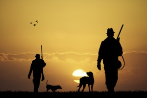 Wird ein Marder überfahren, schreibt die Meldepflicht die Verständigung von Jäger oder Polizei vor.