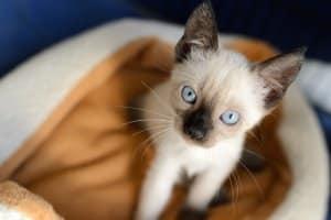 Laut Mietrecht gehören Haustiere wie Katzen und Hunde nicht zu den Kleintieren.