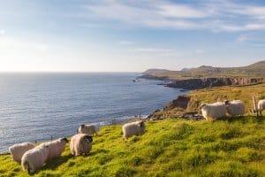 Was gilt es bei Mietwagen in Irland zu beachten?