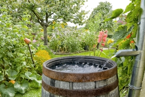 Wenn Sie Mückenlarven töten wollen, müssen Sie die Brutstätten wie Regentonnen beseitigen bzw. ausleeren.