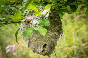 In Österreich umfasst der Naturschutz von Insekten auch den Erhalt von Nestern.