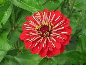 Sachkundige im Pflanzenschutz haben einen Ausweis, der sie berechtigt, in der Landwirtschaft oder im Gartenbau Pflanzenschutzmittel einzusetzen.