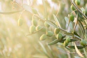 Der Pflanzenschutzlehrgang befähigt Verkäufer zur Beratung. So erlangen auch private Anwender ein wenig Sachkunde