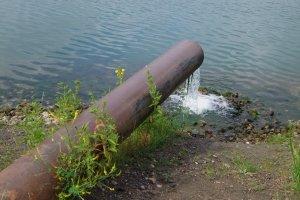 Auf der Roten Liste stehen viele Amphibien. Verschmutztes Gewässer zerstört ihren Lebensraum