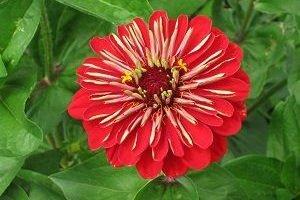 Rote Liste: Viele Insekten sind gefährdet. Sie erfüllen im Ökosystem wichtige Aufgaben wie das Bestäuben von Blumen