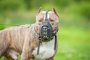 Muss Schmerzensgeld nach einem Hundebiss in Arm, Wade oder Gesicht gezahlt werden?
