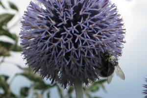 Seltene Pflanzen werden im Gesetz bestimmt, wie zum Beispiel in der Bundesartenschutzverordnung