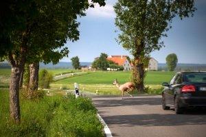 Der Sicherheitsabstand auf der Landstraße nach Vorne ist wichtig, falls plötzlich gebremst werden muss.