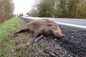 Die Teilkasko der NÜRNBERGER-Kfz-Versicherung kommt im Tarif Komfort für Unfälle mit Tieren aller Art auf.
