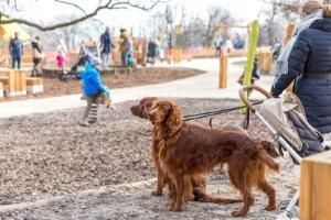 Laut der meisten Spielplatz-Richtlinien müssen Hunde draußen bleiben.