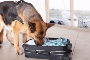 Spürhunde helfen den Beamten der Zollfahndung, Droggenschmuggel aufzudecken.