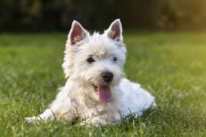Dürfen Hunde alleine unterwegs sein? Nein, die StVO besagt laut § 28, dass Tiere sich im Verkehr in Begleitung befinden müssen.