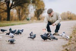Wo dürfen Sie Tauben füttern?
