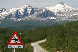 Autofahrer sollten Elchen ausweichen - und sich an das Tempolimit in Schweden halten!