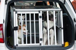 Für jedes Tier gilt: Ein Transport unterliegt gesetzlichen Bestimmungen.