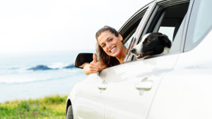 Wer Tiere im Auto transportieren will, muss zahlreiche Regeln beachten