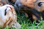 Tiere verschenken - Beitragsbild