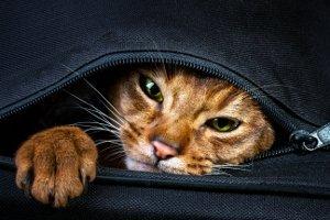 Niemand sollte Tiere verschenken, ohne vorher die Verpflichtungen abzuklären.