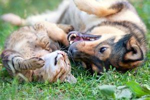 Eine Tierhalterhaftpflicht ist für alle Tierbesitzer mit größeren Haustieren empfehlenswert.