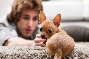 Die Tierhaltung in der Mietwohnung bedarf häufig der Zustimmung durch den Vermieter.