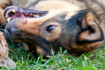 Tierschutz Hunde