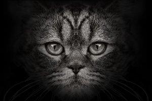 Tierseuchen können von Viehbeständen auch auf andere Tiere übertragen werden, beispielsweise Katzen.