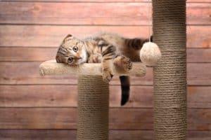Impfung gegen Tollwut: Bei einer Katze kann sie bereits im Alter von acht Wochen stattfinden.