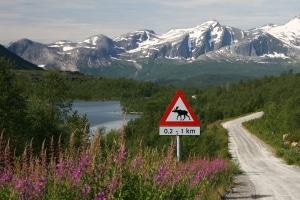 Kommt es im Urlaub zu einem Unfall mit einem Elch, müssen Sie die landeseigenen Vorschriften befolgen.