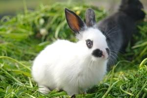 Ein Unfall mit Hase oder Kaninchen sollten Sie der Polizei melden.