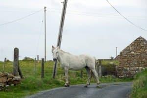 Ein Unfall mit Kutsche, Reitern oder Pferden kann durch umsichtiges Verhalten verhindert werden.