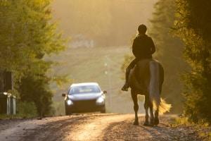 Bei einem Verkehrsunfall mit einem Pferd wird unter anderem die typische Tiergefahr berücksichtigt.