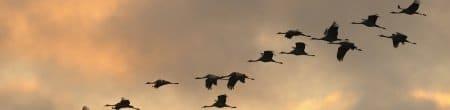 Vögel und Vogelschutz
