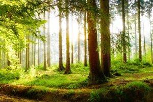 Waldbrand: Strafe droht Brandverursachern. Aber auch Zuwiderhandeln ohne Folgen kostet bis zu 5.000 Euro Bußgeld.