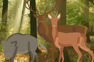 Ebenso wie viele andere Wildtiere fällt auch der Waschbär unter das Jagdrecht (Ausnahme Bremen).